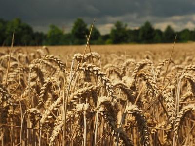 Folgen der Insolvenz von KTG Agrar