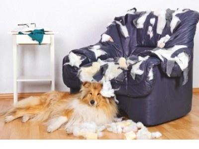 Mietrecht: Fünf Hunde in der Wohnung sind vier Hunde zu viel