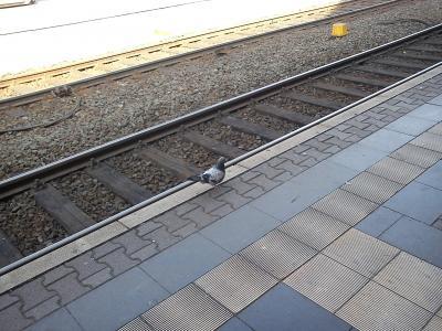 Reiserecht aktuell: Wer haftet für Schäden und Verletzungen bei Glatteis auf dem Bahnsteig?