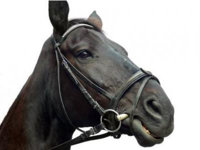 Rücktritt vom Pferdekaufvertrag