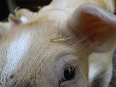 Tierarzt – Wer zahlt Behandlungskosten in einem Notfall