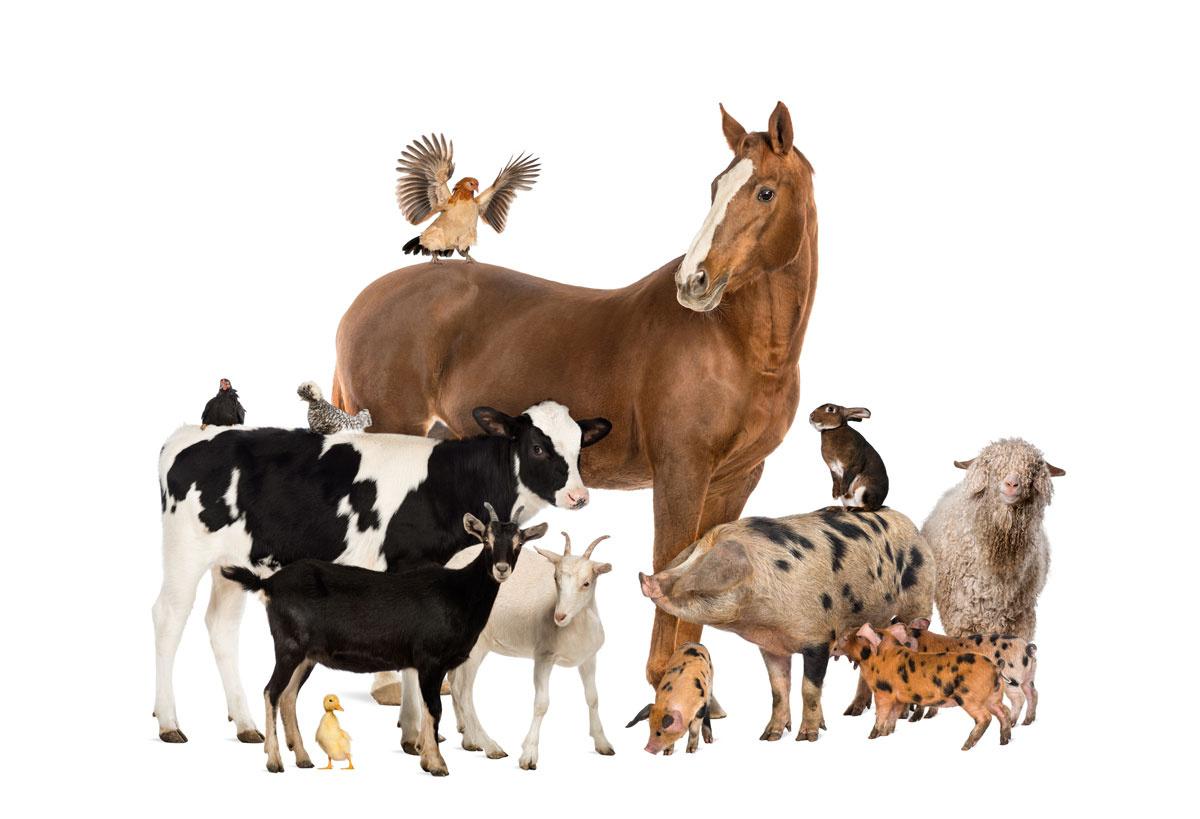Tierhalterhaftung