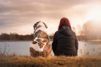 Hund, Haustier, Freundschaft, Scheidung